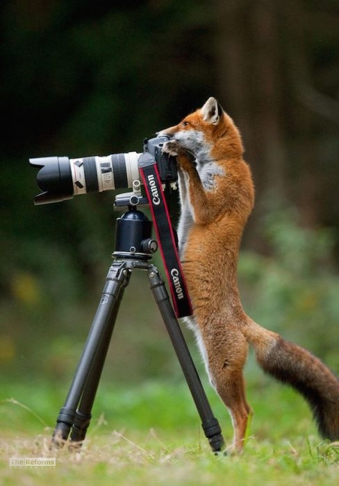 animal-photographer-wcth01