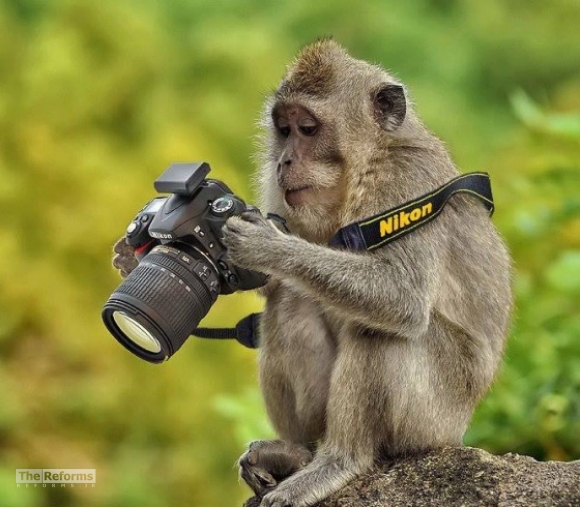animal-photographer-wcth02