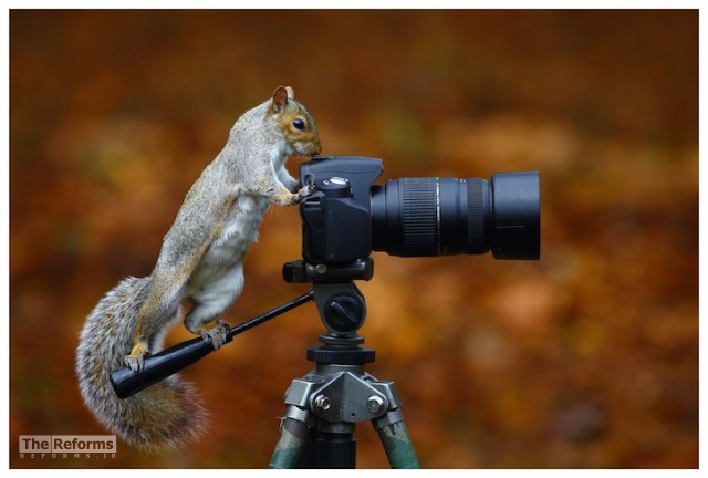 animal-photographer-wcth03-640x432