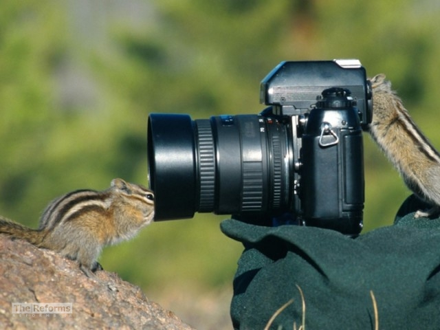 animal-photographer-wcth05-640x480