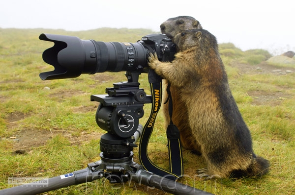animal-photographer-wcth06