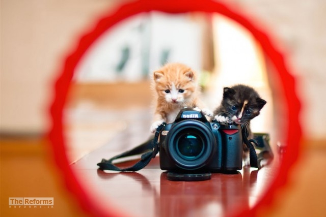 animal-photographer-wcth07-640x427