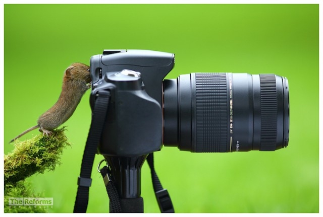 animal-photographer-wcth08-640x431