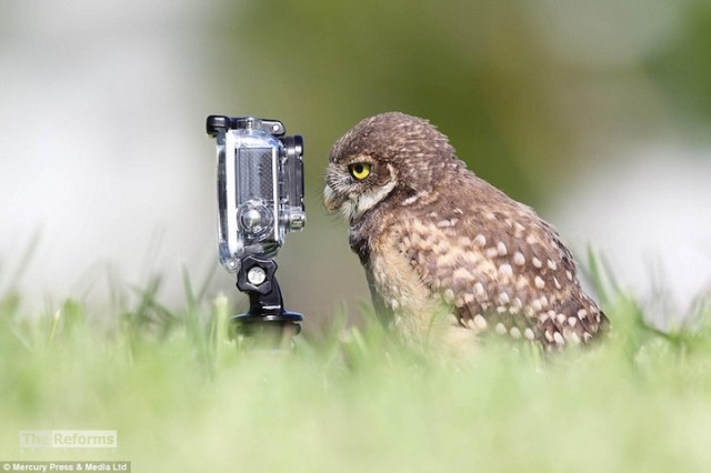 animal-photographer-wcth09-640x426