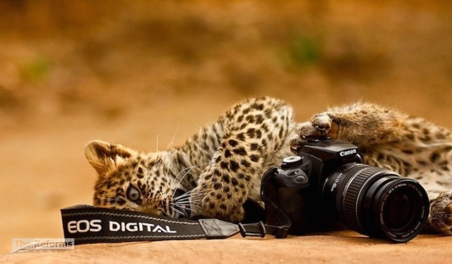 animal-photographer-wcth12-640x374