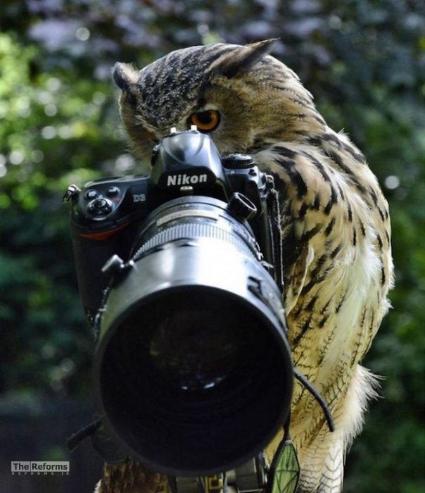 animal-photographer-wcth13-640x742