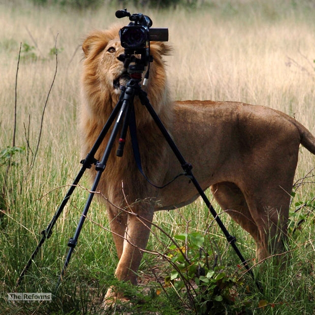 animal-photographer-wcth14