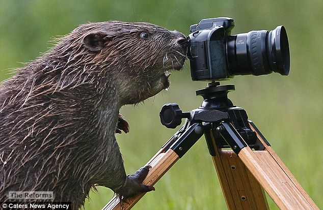 animal-photographer-wcth15