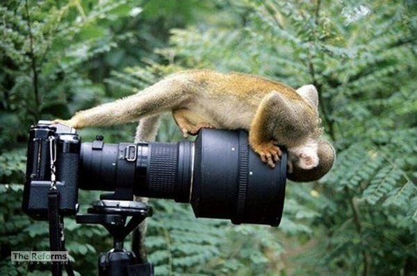 animal-photographer-wcth17